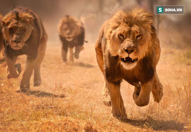 Bầy sư tử cuồng dại, giết chết 1.500 người: Vụ động vật thảm sát nhiều người nhất lịch sử 3