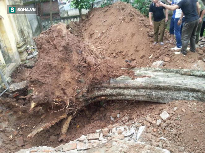Bán cây sưa 26 tỷ ở Bắc Ninh: Mỗi người dân được chia từ 5 - 10 triệu đồng