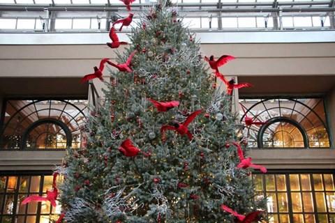 Cây thông Noel thật cao 5 mét được cho ngủ đông đưa về Việt Nam - Ảnh 2.
