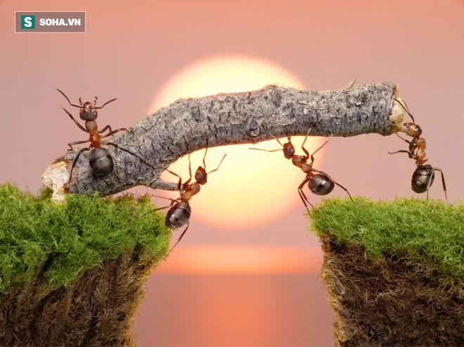 Sinh tồn và những điều chúng ta cần học từ động vật - Ảnh 1.
