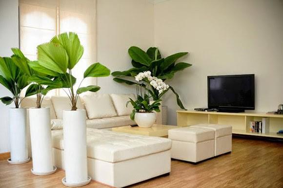 Những lỗi trồng cây phong thủy trong nhà khiến gia đình tiêu hao tài lộc - Ảnh 2
