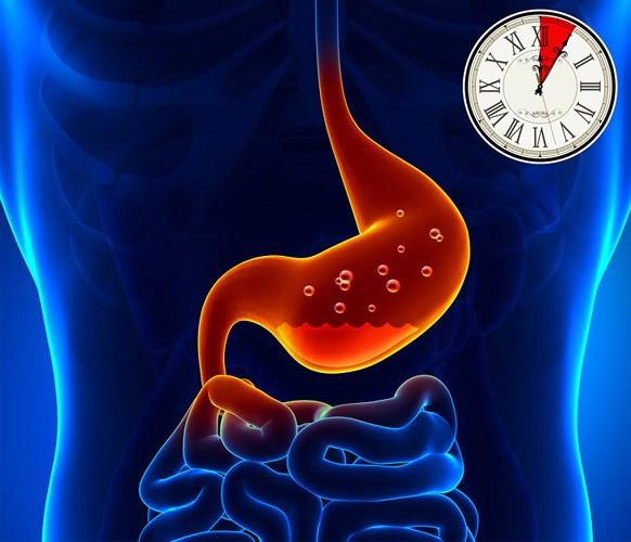 Mất bao lâu để tiêu hóa hết thực phẩm ăn hàng ngày? - Ảnh 1.