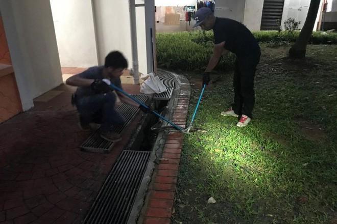 Singapore: Đi tìm mèo lạc lúc 4 giờ sáng, người phụ nữ bị trăn dài 3m tấn công - Ảnh 2.