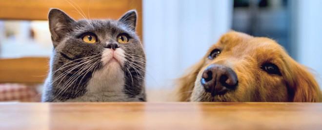 """Khoa học chứng minh: Trí tuệ của chó chỉ thuộc loại bình thường"""" trong thế giới động vật, dốt hơn cả mèo - Ảnh 2."""