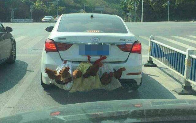 Chú vịt trắng ngóc đầu, nằm phía sau ô tô - hình ảnh hài hước gây chú ý trong ngày chủ nhật - ảnh 5