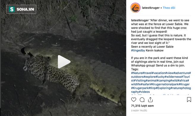 Cá sấu sông Nile lạnh lùng hạ sát báo hoa mai ngay trong đêm - Ảnh 2.