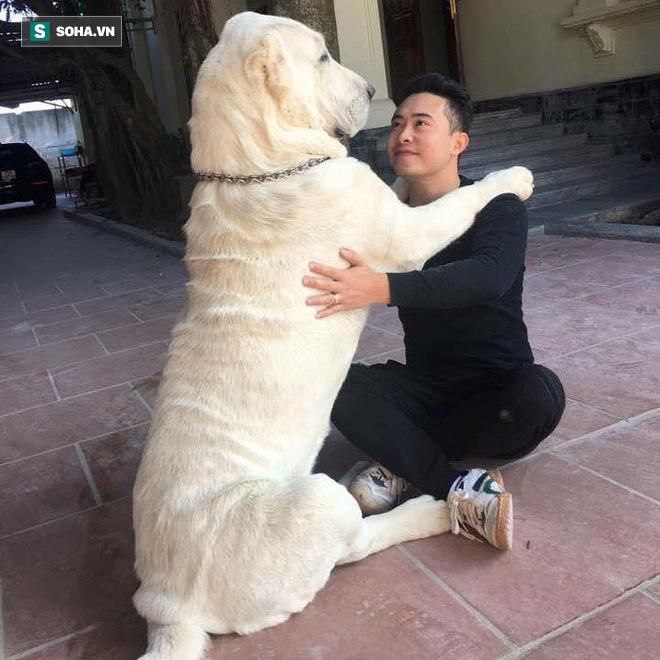"""Chó bố nặng gần 90 kg và đàn chó con hiếm gây sốt"""" mạng xã hội Việt - Ảnh 5."""