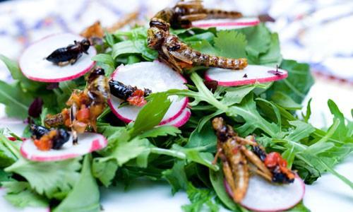 Ăn côn trùng để... cứu trái đất - Ảnh 1.