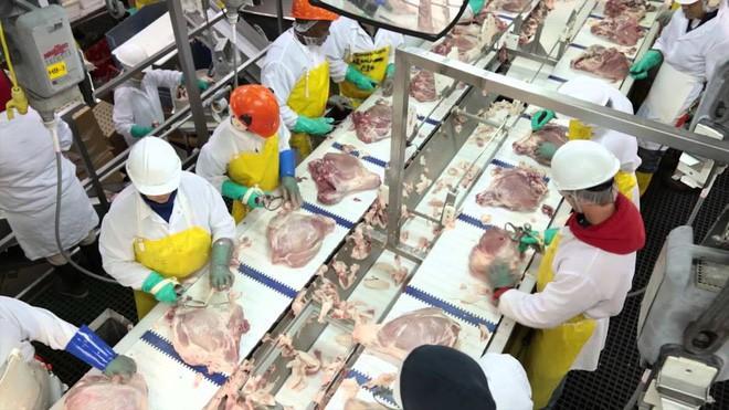 Nhân viên vô tư tè bậy cạnh dây chuyền sản xuất, nhà máy phải vứt bỏ gần 23 tấn thịt lợn - Ảnh 1.