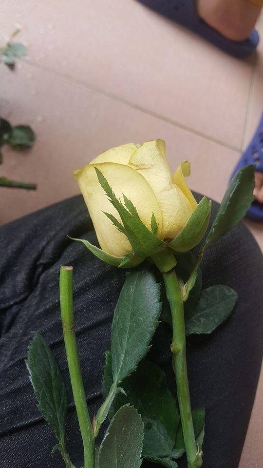 Bông hồng lừa đảo trong ngày 20/10 khiến nhiều người chẳng dám tin ai - Ảnh 2.
