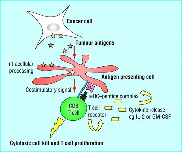 Chuyên gia hàng đầu VN nói về hiệu quả của thuốc miễn dịch trị ung thư giá 62 triệu/1lọ - Ảnh 1.