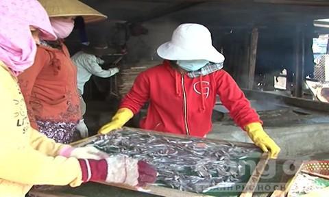 Quảng Ngãi: Ngư dân trúng trăm triệu sau một đêm đánh bắt cá cơm - Ảnh 2.