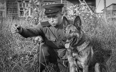 Vì sao Hồng quân Liên Xô phải dùng chó cảm tử để tấn công xe tăng Đức? - Ảnh 1.
