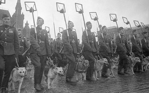 Vì sao Hồng quân Liên Xô phải dùng chó cảm tử để tấn công xe tăng Đức? - Ảnh 2.