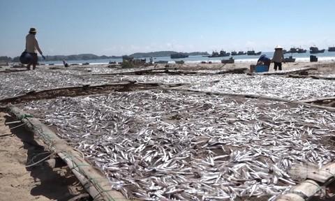 Quảng Ngãi: Ngư dân trúng trăm triệu sau một đêm đánh bắt cá cơm - Ảnh 3.