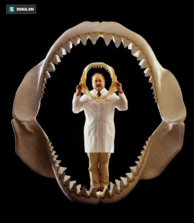 Cái chết của quái vật đại dương Megalodon: Bí ẩn còn thách thức giới khoa học  - Ảnh 1.