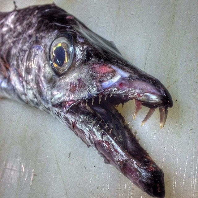 Gửi bạn thêm 53 bằng chứng cho thấy biển sâu vô cùng đáng sợ - ảnh 1
