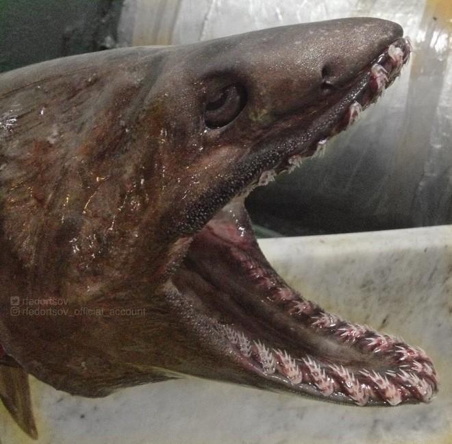 Gửi bạn thêm 53 bằng chứng cho thấy biển sâu vô cùng đáng sợ - ảnh 13