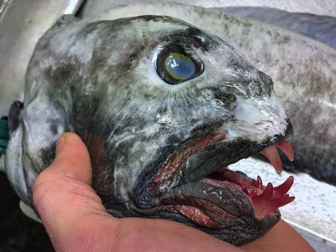 Gửi bạn thêm 53 bằng chứng cho thấy biển sâu vô cùng đáng sợ - ảnh 4