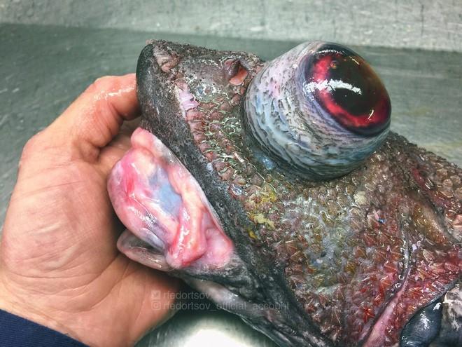 Gửi bạn thêm 53 bằng chứng cho thấy biển sâu vô cùng đáng sợ - ảnh 34