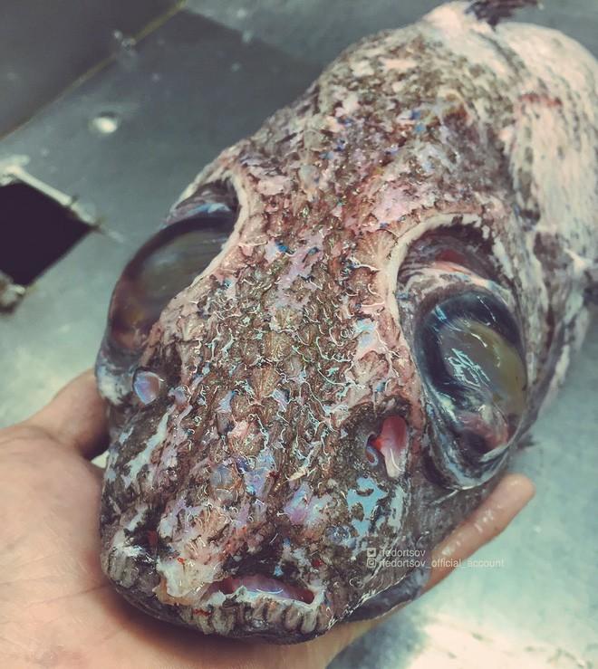 Gửi bạn thêm 53 bằng chứng cho thấy biển sâu vô cùng đáng sợ - ảnh 49