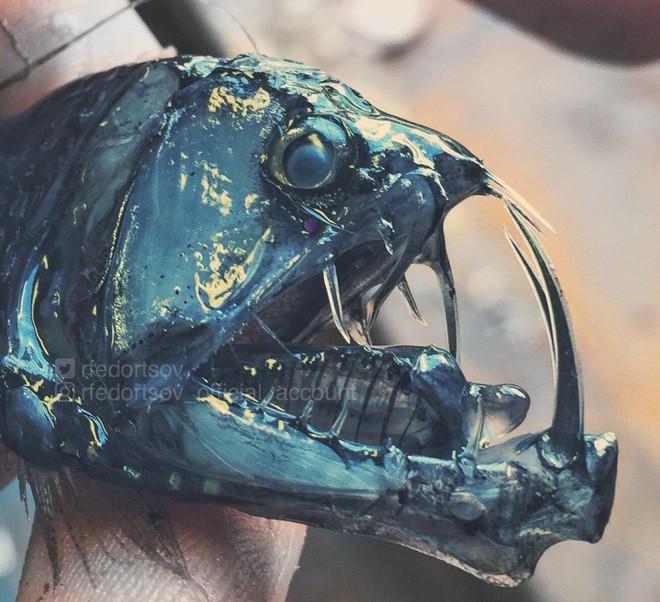 Gửi bạn thêm 53 bằng chứng cho thấy biển sâu vô cùng đáng sợ - ảnh 9