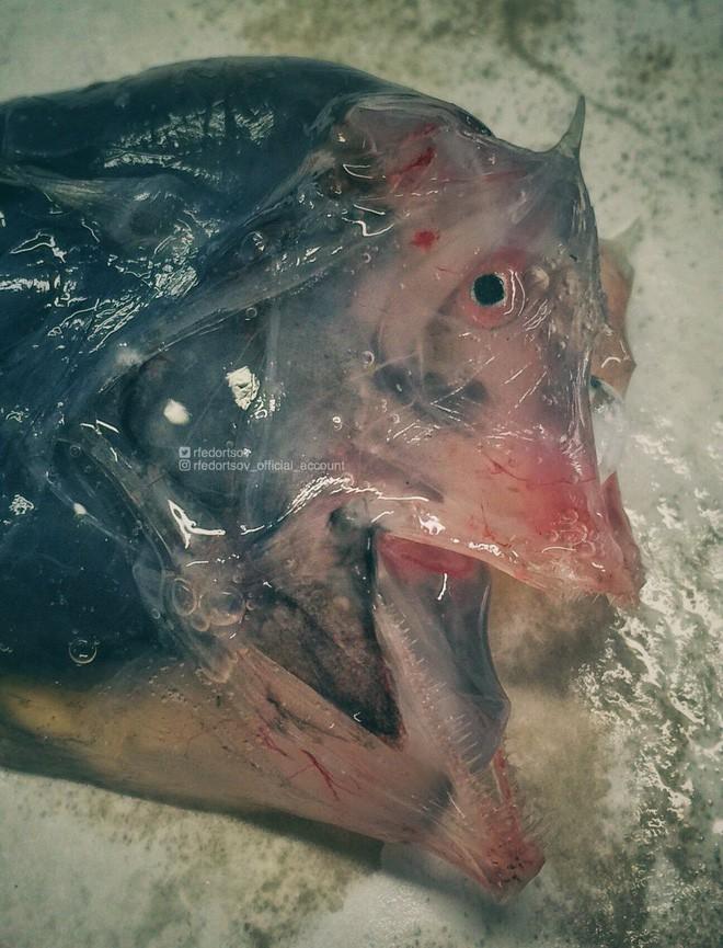 Gửi bạn thêm 53 bằng chứng cho thấy biển sâu vô cùng đáng sợ - ảnh 10
