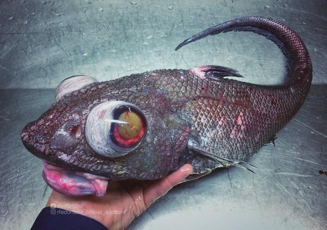Gửi bạn thêm 53 bằng chứng cho thấy biển sâu vô cùng đáng sợ - ảnh 11
