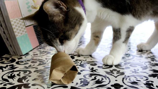 11 công dụng bất ngờ của lõi giấy vệ sinh - Ảnh 9.