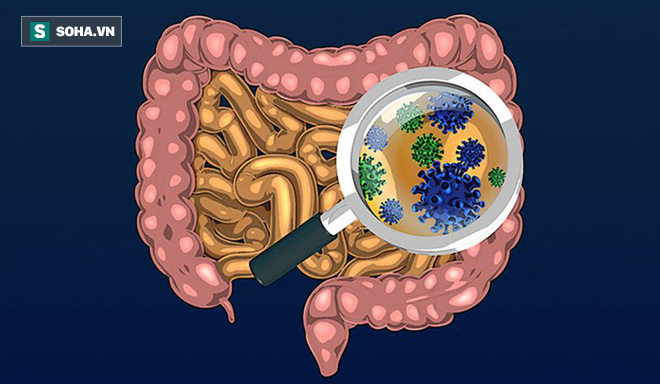 Ruột có sạch thì cơ thể mới khỏe: 7 thực phẩm giúp thải độc ruột hiệu quả ai cũng nên ăn - Ảnh 1.