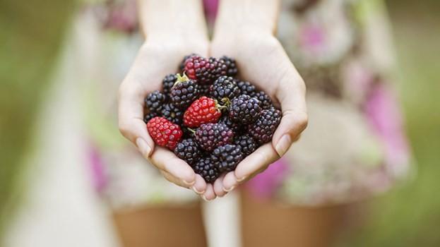 10 thực phẩm giàu chất xơ cho người mắc bệnh tiểu đường - Ảnh 1.