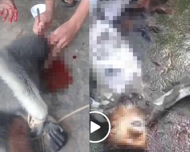 Nam thanh niên đăng ảnh giết khỉ lên facebook bị công an triệu tập - Ảnh 3.