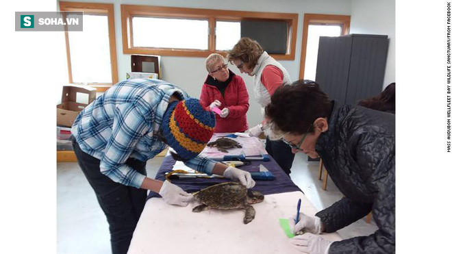 Bất thường: Hàng trăm con rùa chết cứng dạt vào bờ biển Mỹ - Ảnh 2.