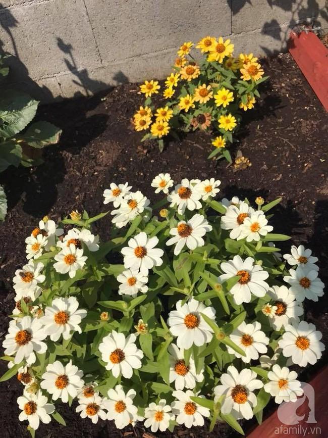 Để chiều lòng vợ, chồng Mỹ thiết kế khu vườn trồng đủ các loại hoa và rau quả Việt để vợ đỡ nhớ quê hương - Ảnh 11.