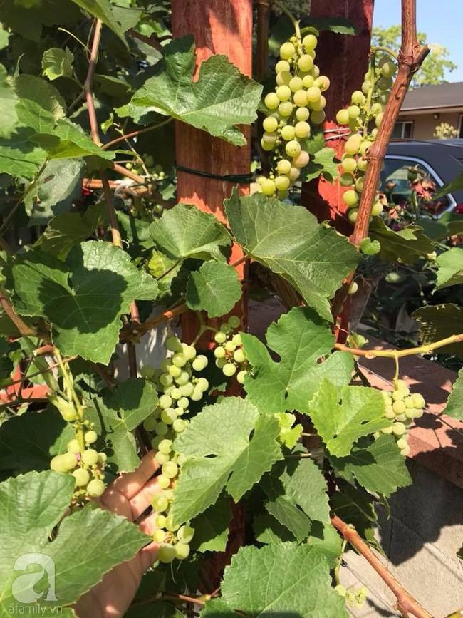 Để chiều lòng vợ, chồng Mỹ thiết kế khu vườn trồng đủ các loại hoa và rau quả Việt để vợ đỡ nhớ quê hương - Ảnh 20.