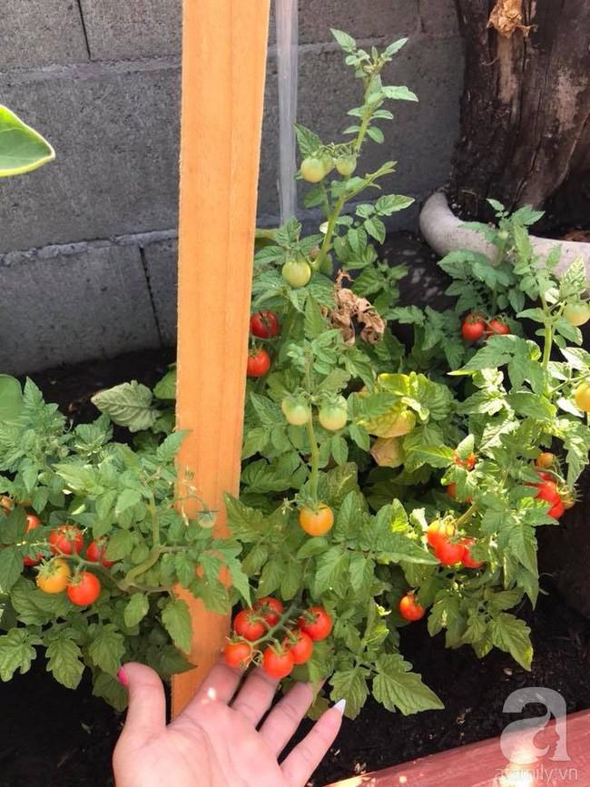 Để chiều lòng vợ, chồng Mỹ thiết kế khu vườn trồng đủ các loại hoa và rau quả Việt để vợ đỡ nhớ quê hương - Ảnh 24.