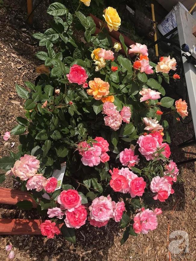 Để chiều lòng vợ, chồng Mỹ thiết kế khu vườn trồng đủ các loại hoa và rau quả Việt để vợ đỡ nhớ quê hương - Ảnh 4.