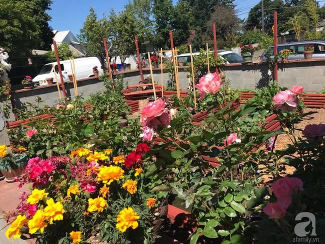 Để chiều lòng vợ, chồng Mỹ thiết kế khu vườn trồng đủ các loại hoa và rau quả Việt để vợ đỡ nhớ quê hương - Ảnh 8.