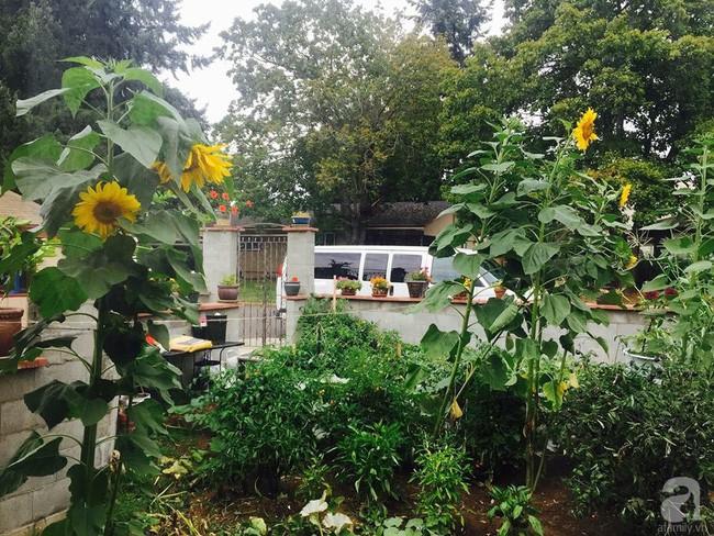 Để chiều lòng vợ, chồng Mỹ thiết kế khu vườn trồng đủ các loại hoa và rau quả Việt để vợ đỡ nhớ quê hương - Ảnh 9.