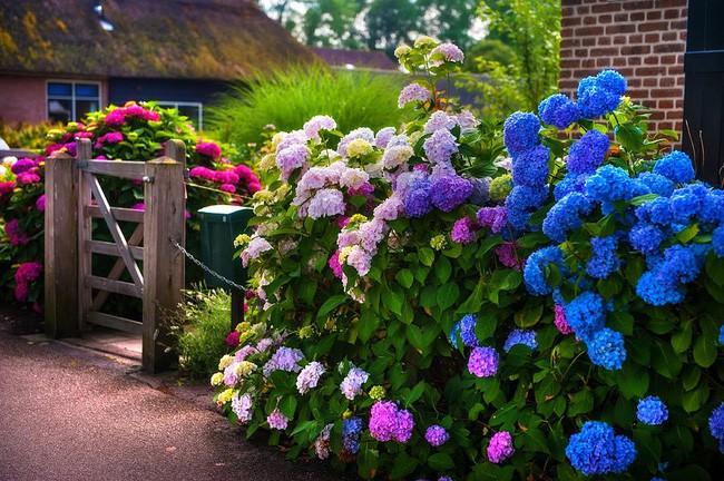 Ngôi làng không có đường đi, nhà nào nhà đó tràn ngập hoa tươi, đẹp như trong cổ tích - Ảnh 11.