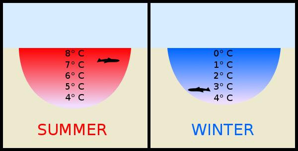 Khi lạnh, tại sao nước không đóng băng toàn bộ một lúc mà lại đông cứng từ trên xuống? - Ảnh 1.