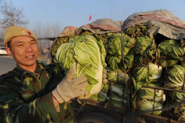 Xu hướng mới của thanh niên Trung Quốc: 7 triệu người gồm cả Thạc sĩ và Tiến sĩ đua nhau bỏ thành phố, đổ xô về quê làm nông dân - Ảnh 2.