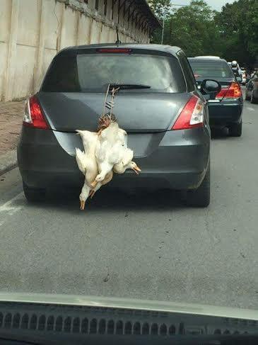 Đôi gà trống treo lủng lặng sau ô tô khiến bao người phải ngoái nhìn - Ảnh 4.