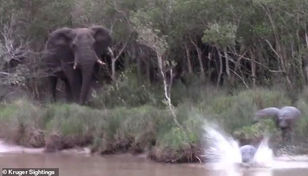 Bị chọc tức, voi lớn nổi giận đạp đổ cây hăm dọa, thủ phạm chỉ biết cắm đầu chạy - Ảnh 3.
