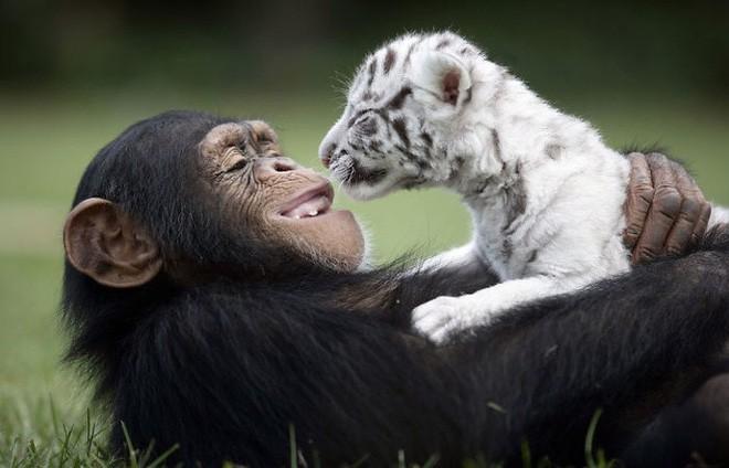 Tan chảy với loạt ảnh về tình yêu mù quáng của các con vật không cùng giống loài - Ảnh 1.