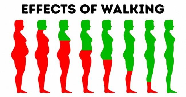 Đi bộ 15-30 phút/ngày: 10 tác động kỳ diệu lên cơ thể mà nếu không xem, bạn sẽ không tin - Ảnh 1.