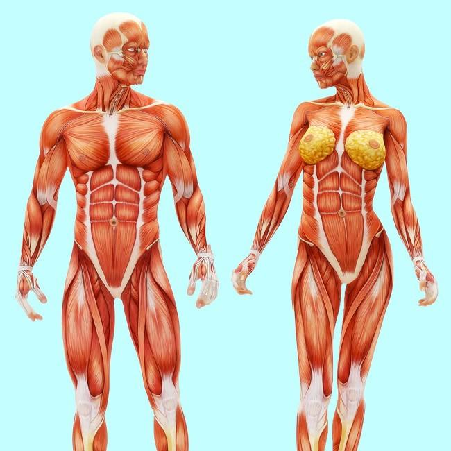 Đi bộ 15-30 phút/ngày: 10 tác động kỳ diệu lên cơ thể mà nếu không xem, bạn sẽ không tin - Ảnh 8.