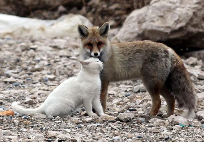 Tan chảy với loạt ảnh về tình yêu mù quáng của các con vật không cùng giống loài - Ảnh 11.