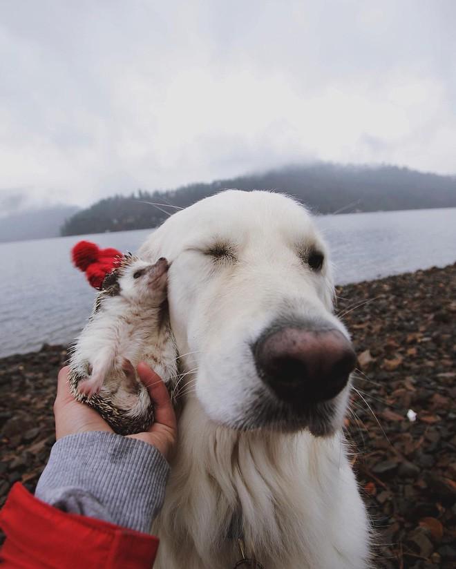 Tan chảy với loạt ảnh về tình yêu mù quáng của các con vật không cùng giống loài - Ảnh 13.
