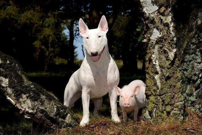 Tan chảy với loạt ảnh về tình yêu mù quáng của các con vật không cùng giống loài - Ảnh 20.